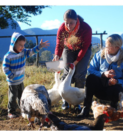 Feed the animals at Cedar Glen Farmstay