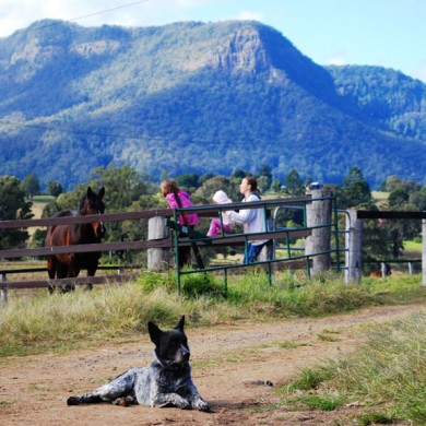 Farmstay accommodation within easy reach of Brisbane and the Gold Coast