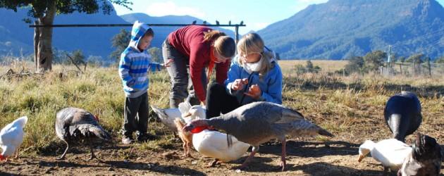 Feeding the animals at Cedar Glen Farmstay
